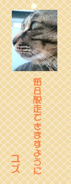 七夕祭り 08 ユズさん短冊