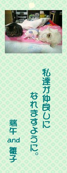 七夕祭り 09 端午and雛子さん短冊