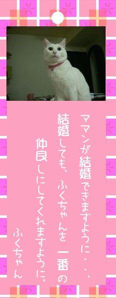 七夕祭り 2008 12 ふくちゃんのお願い事