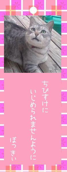 七夕祭り 2008 14 ぽっきぃさんのお願い事