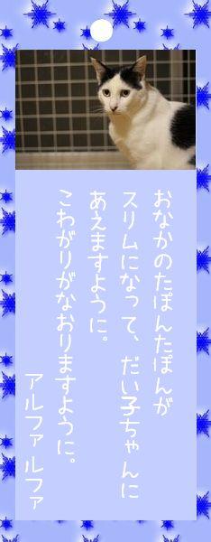 七夕祭り 2008 21 アルファルファさんのお願い事