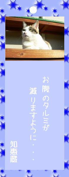 七夕祭り 2008 23 知恵蔵さんのお願い事