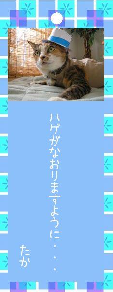 七夕祭り 2008 27 すなふ家 タカ君