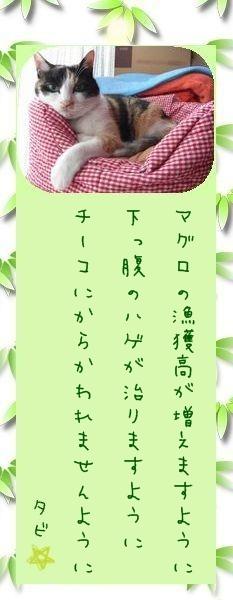 七夕祭り 2009 02 タビさんのお願い事