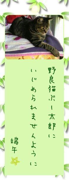 七夕祭り 2009 05 端午さんのお願い事