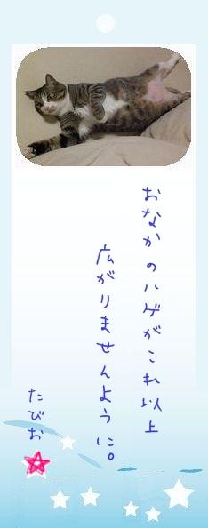 七夕祭り 2009 09 たびおさんのお願い事