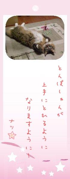 七夕祭り 2009 10 ナツさんのお願い事