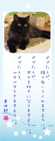 七夕祭り 2009 11 金四郎さんのお願い事