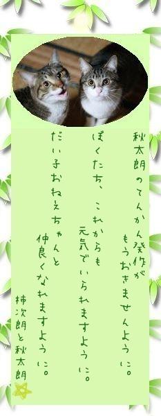 七夕祭り 2009 16 柿次朗さんと秋太朗さんのお願い事