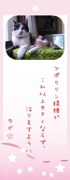 七夕祭り 2009 19 タビさん2のお願い事