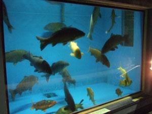 館内にはまるで水族館のようなエリアも…
