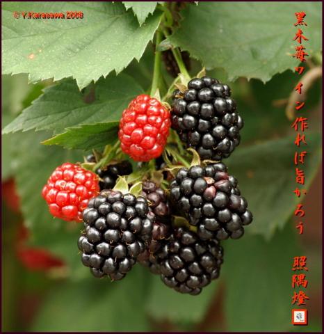 080809黒木苺