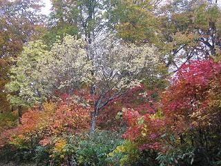 御池付近の紅葉