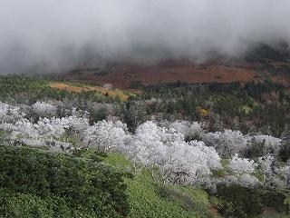 霧氷と紅葉