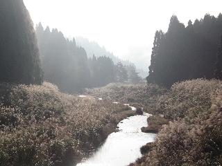 朝の針畑川
