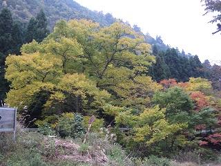 20081101-03生杉 076