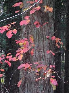 20081109生杉 045