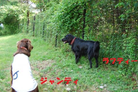001_convert_20090608184146.jpg