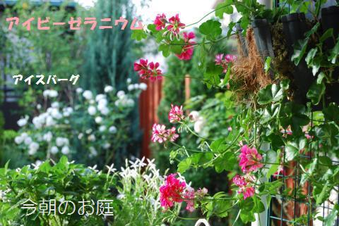 004_convert_20090713125158.jpg