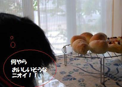 004_convert_20090801130019.jpg