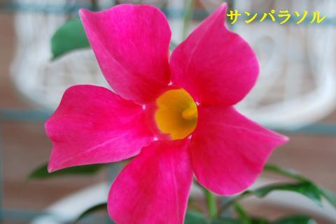 008_convert_20090706114336.jpg