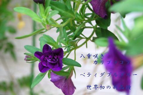 009_convert_20090614144758.jpg