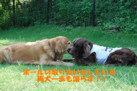 012_convert_20090608191934.jpg
