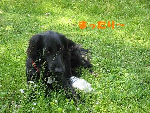 016_convert_20090515221145.jpg