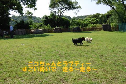016_convert_20090624081911.jpg