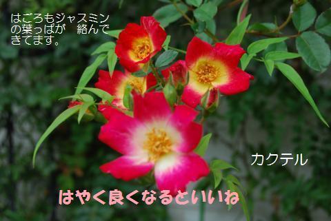 018_convert_20090707120916.jpg
