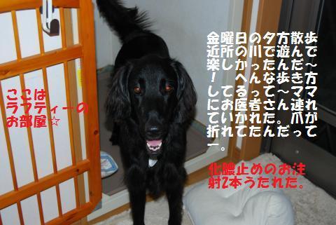 026_convert_20090713130846.jpg