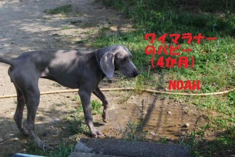 030_convert_20090608192932.jpg