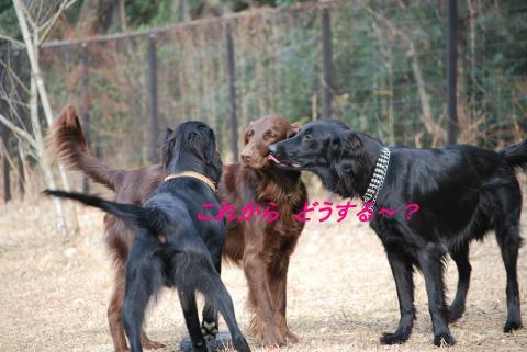 DSC_0059_convert_20090119160448.jpg