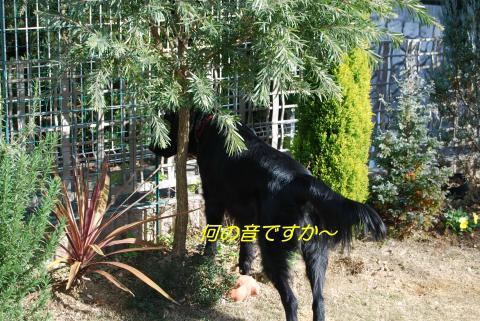 DSC_0074_convert_20090129154958.jpg