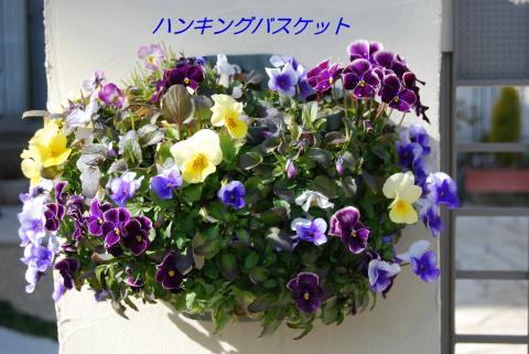 DSC_0077_convert_20090129155224.jpg