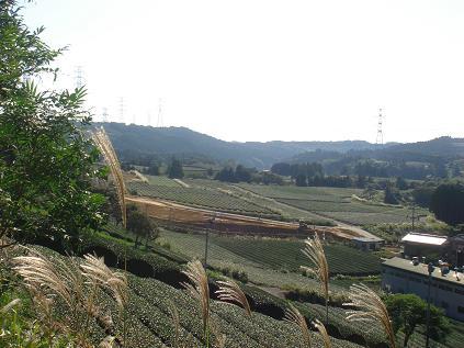 081101静岡