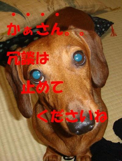DSC00186_convert_20090424172318_20090424174250.jpg