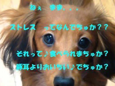 DSC01445_convert_20090422165712.jpg