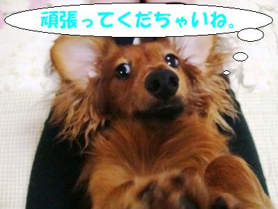 DSC02468.jpg