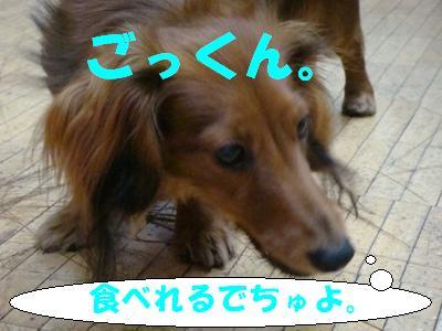 DSC02746-1.jpg