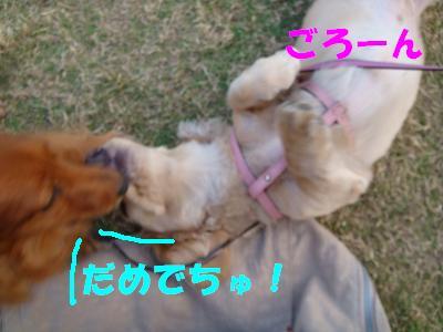 DSC02897-1.jpg