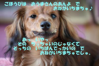 IMG_1779-1_convert_20090422184545.jpg