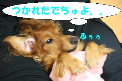 IMG_5550.jpg