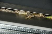 カエル-2