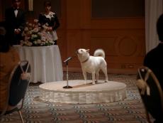 fig_cm_wedding.png