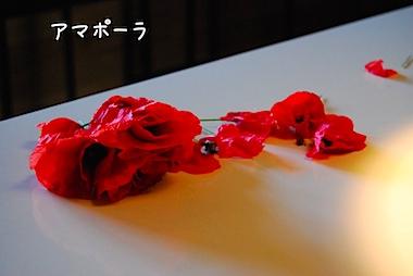 DSC_0314k.jpg