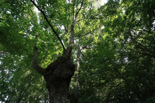 台場クヌギ的な林