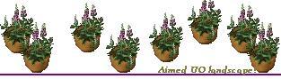 ジキタリスの鉢植え