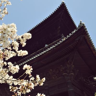 南禅寺と桜