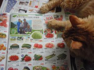 トマト買って!